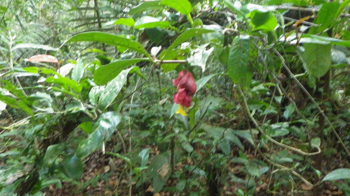 Chroniques Guyanaises, le second séjour en forêt, 21 mars 2015