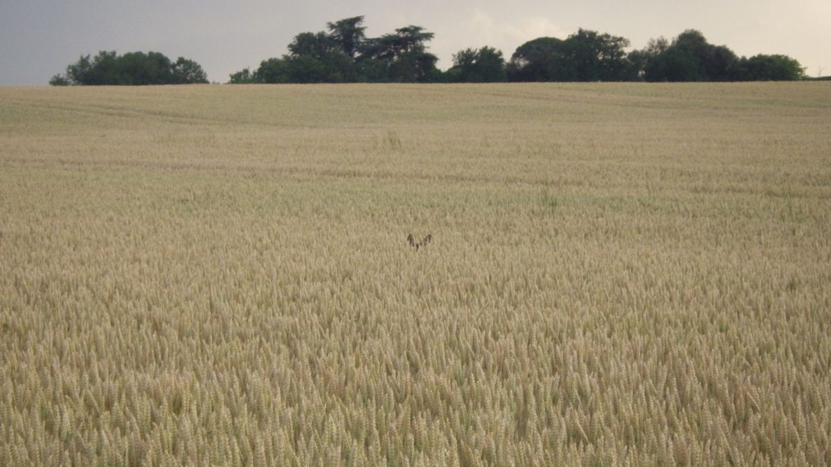 Une chasse express, 8 juin 2015