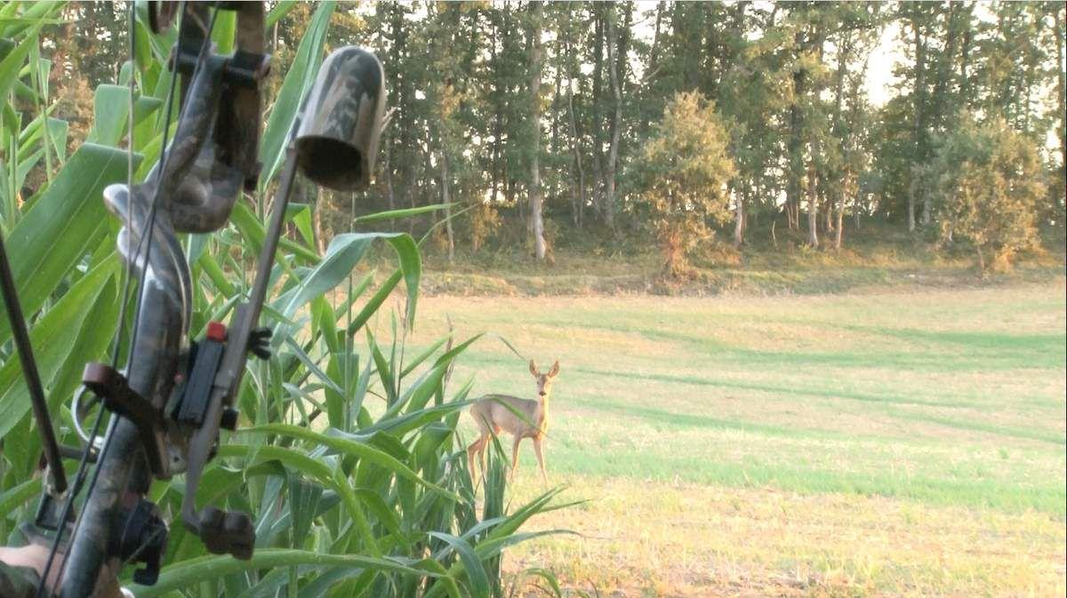 Mauvaise flèche sur un chevrillard, 14 septembre 2012