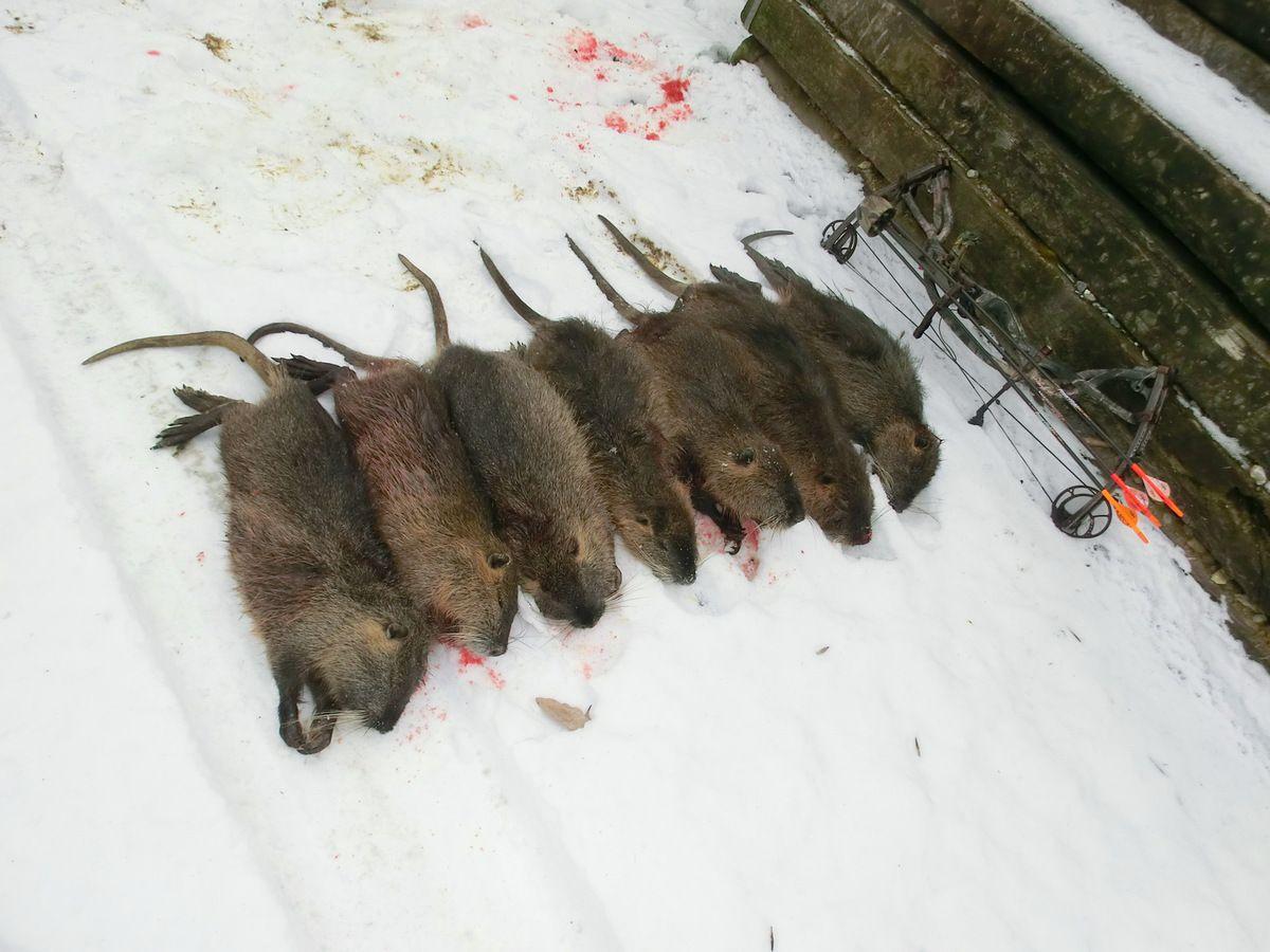 Beau tableau de chasse réalisé par temps de neige.