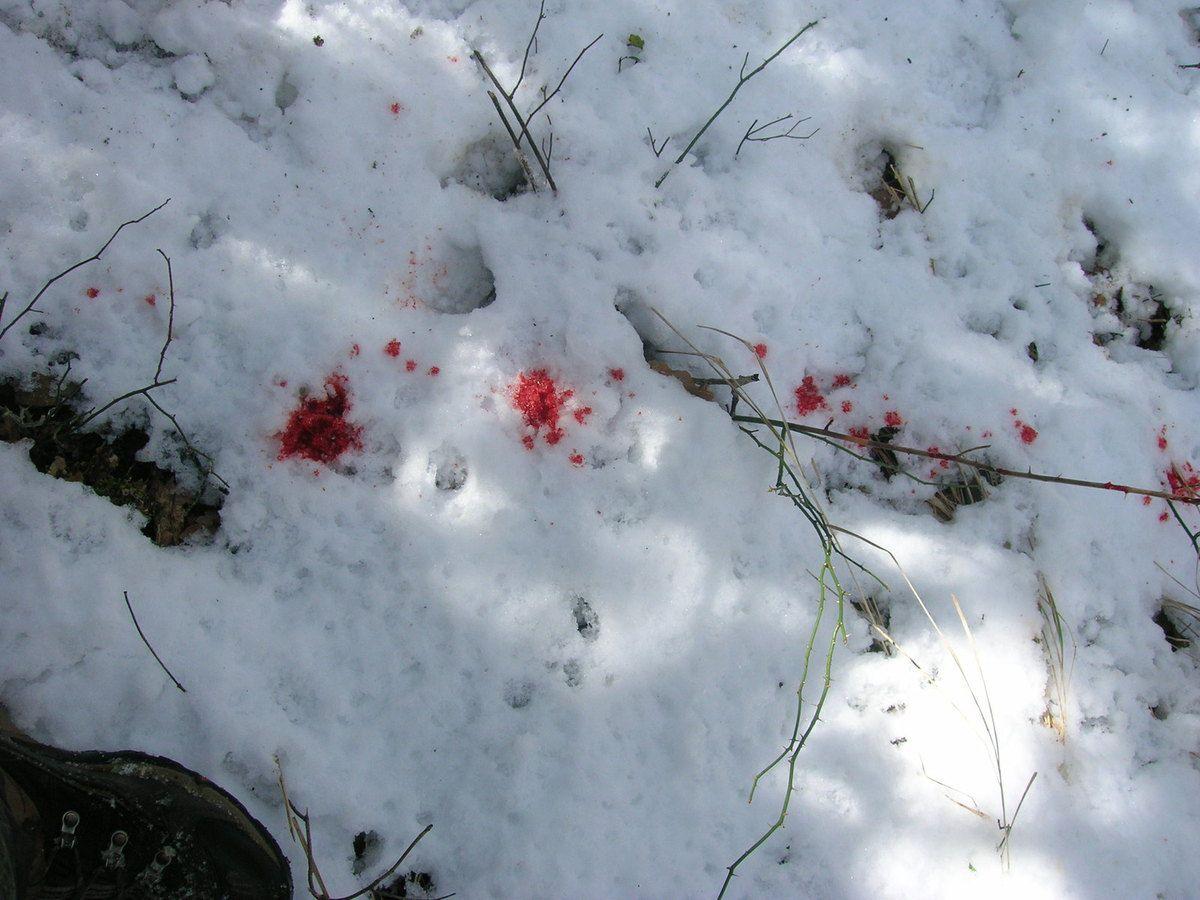 Une biche sarrancolinoise,1 février 2010