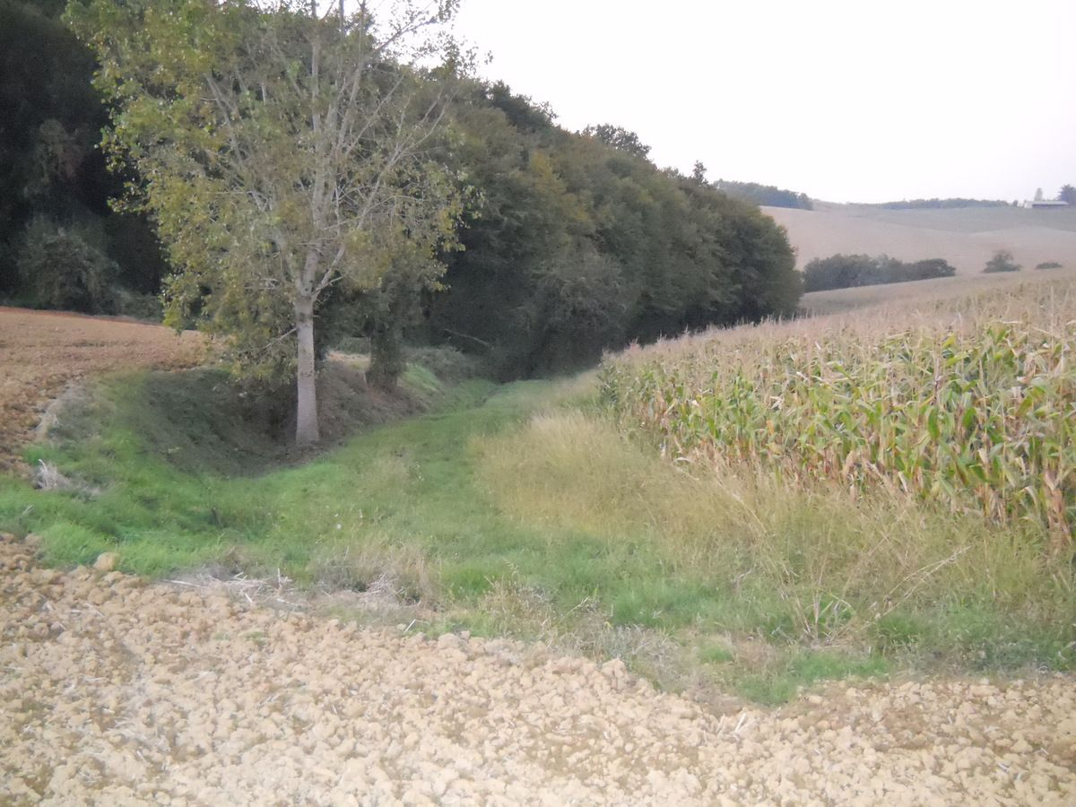Un chevrillard à l'approche, 14 octobre 2010