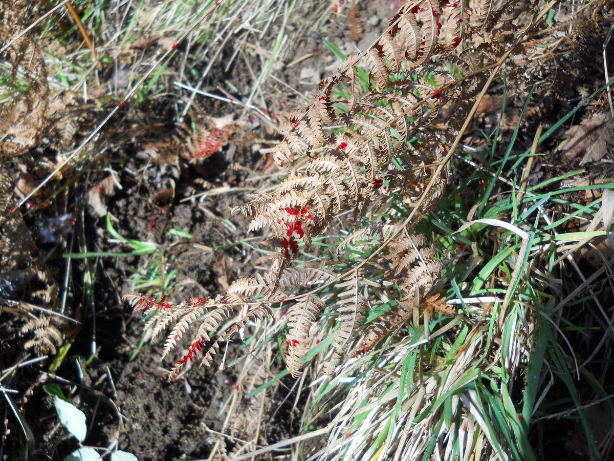 Après le daguet, la bichette et le cerf... le here, 29 novembre 2010