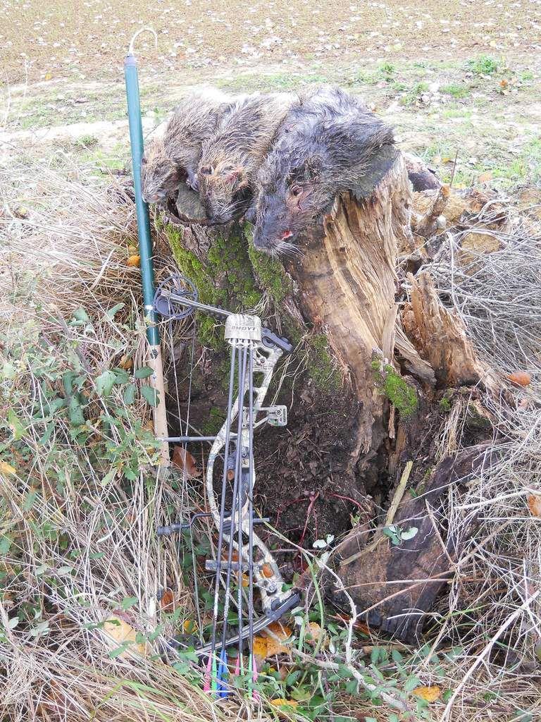 Qui a dit que la chasse ça n'était pas du sport ? 11 novenbre 2010