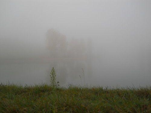 Ragondins dans la brume, 6 novembre 2010