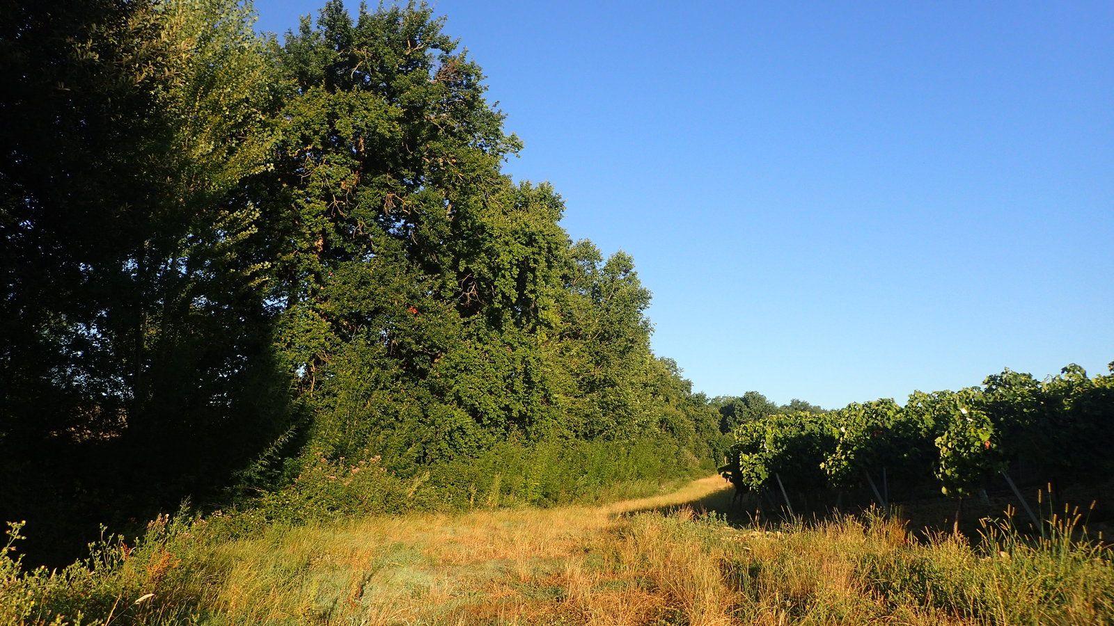 Une belle matinée de chasse, 19 juillet 2020