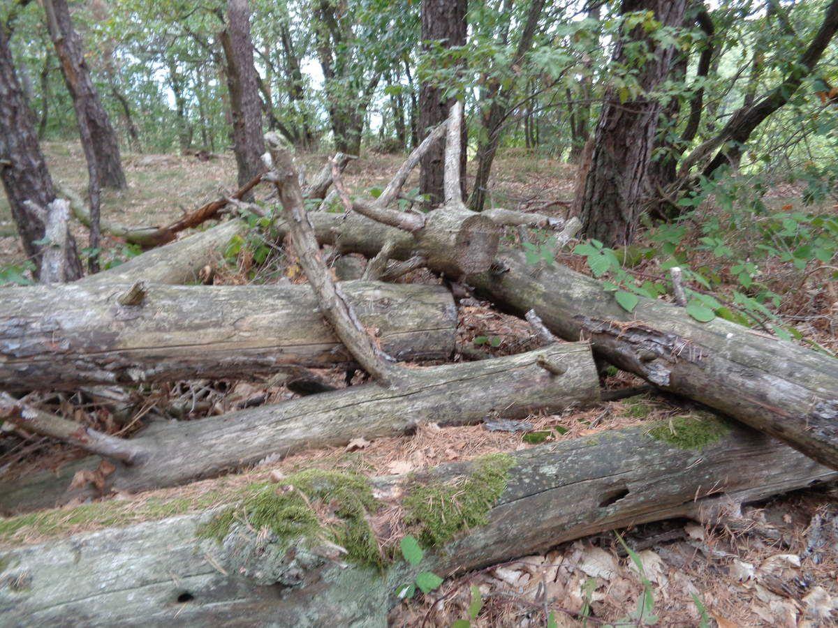 Mes photos prises au cours de la randonnée .......