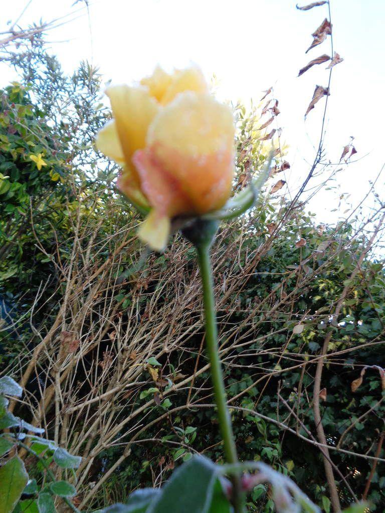 Mon Clos Fleuri en décembre ....