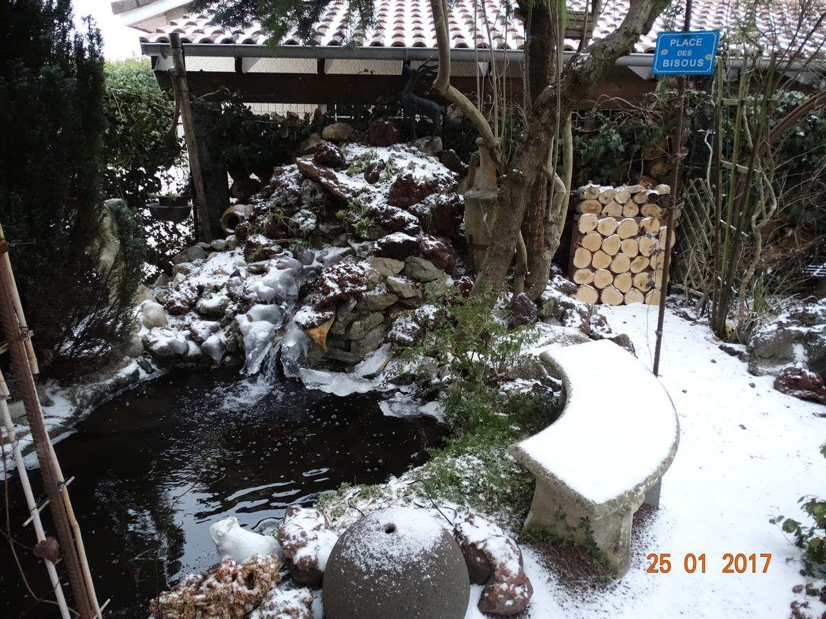 Les photos prises par moi même  de mon jardin en janvier ......