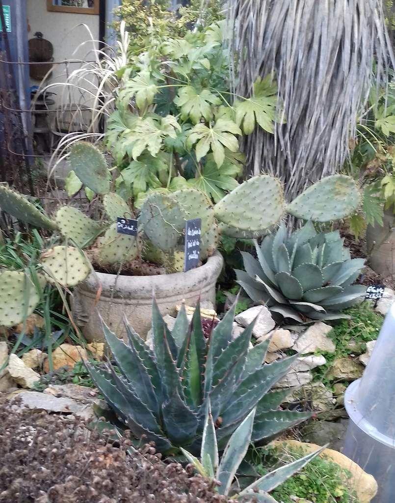 Toutes les photos sont de moi ,prises dans mon jardin en février ......