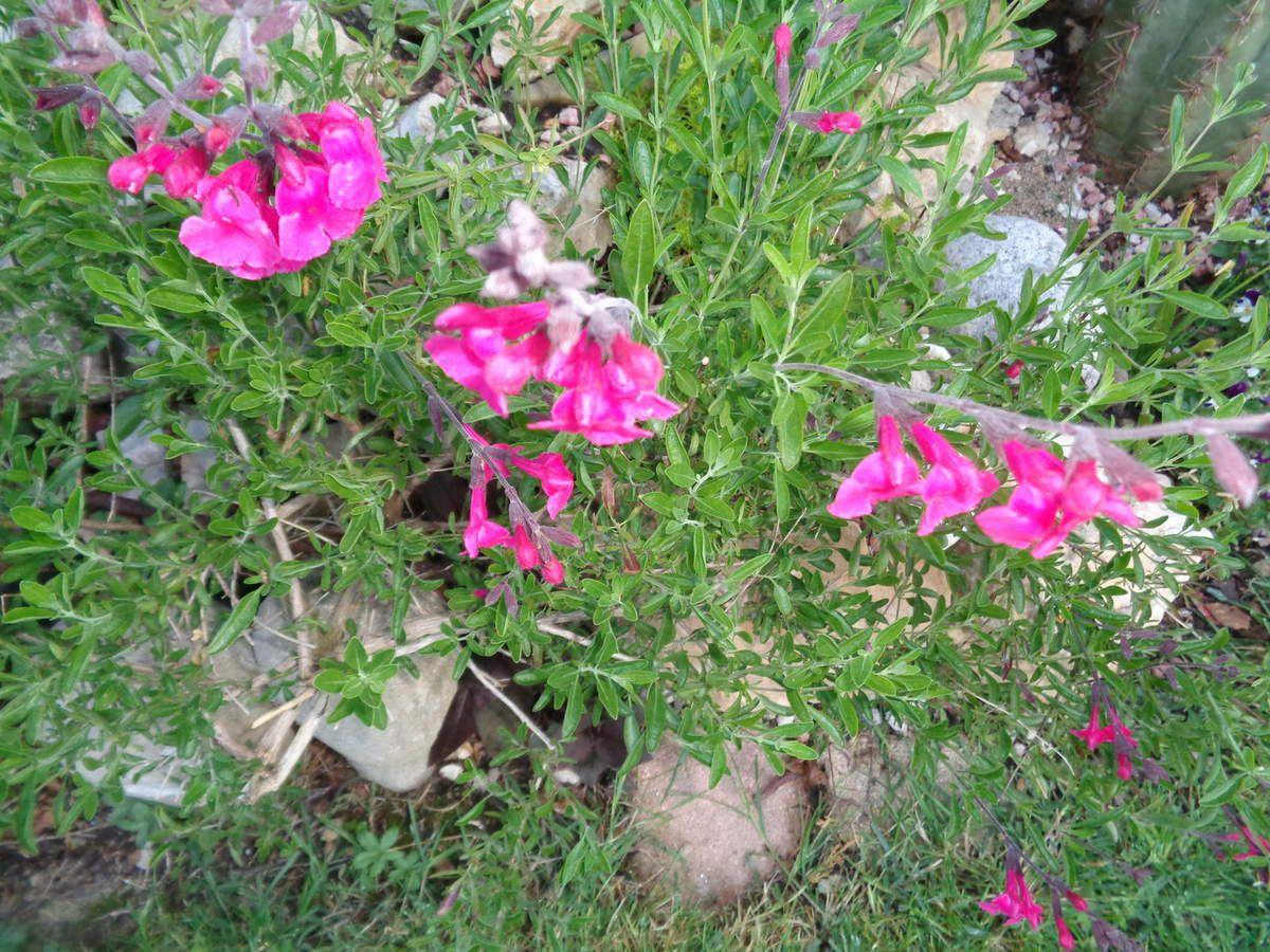 Mon jardin Le Clos fleuri  en avril .....