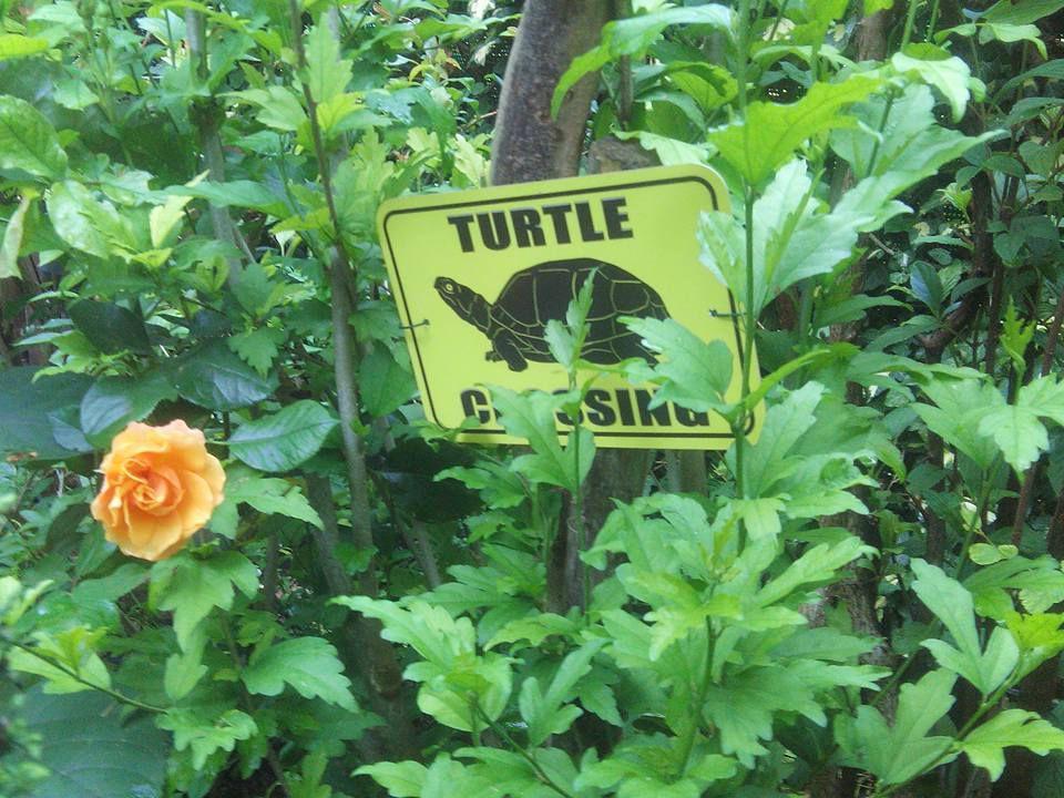 Les rendez vous aux jardins au Clos fleuri les 2,3 et 4 juin 2017