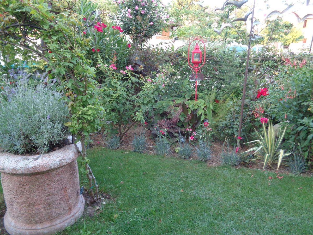 Photos de mon jardin ,prises ce matin .........