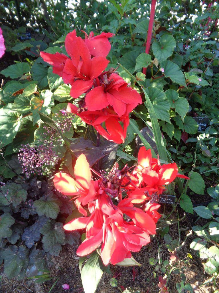 Photos prises ce matin  dans mon jardin Le Clos fleuri ......