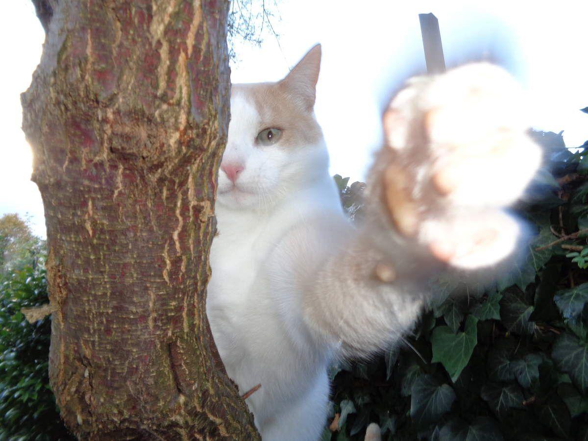 """Mon chat """"Déluge"""""""
