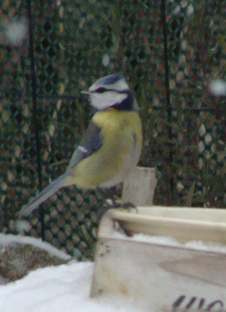 Une mangeoire  pour nourrir les oiseaux en hiver .....