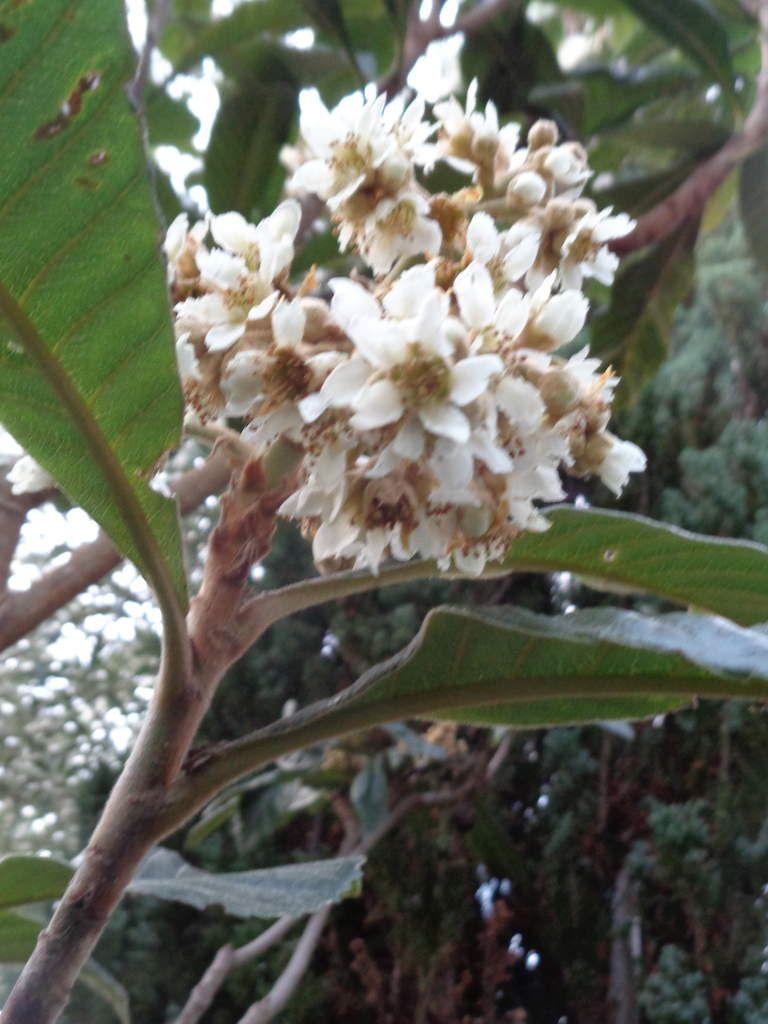 Le Clos fleuri en novembre