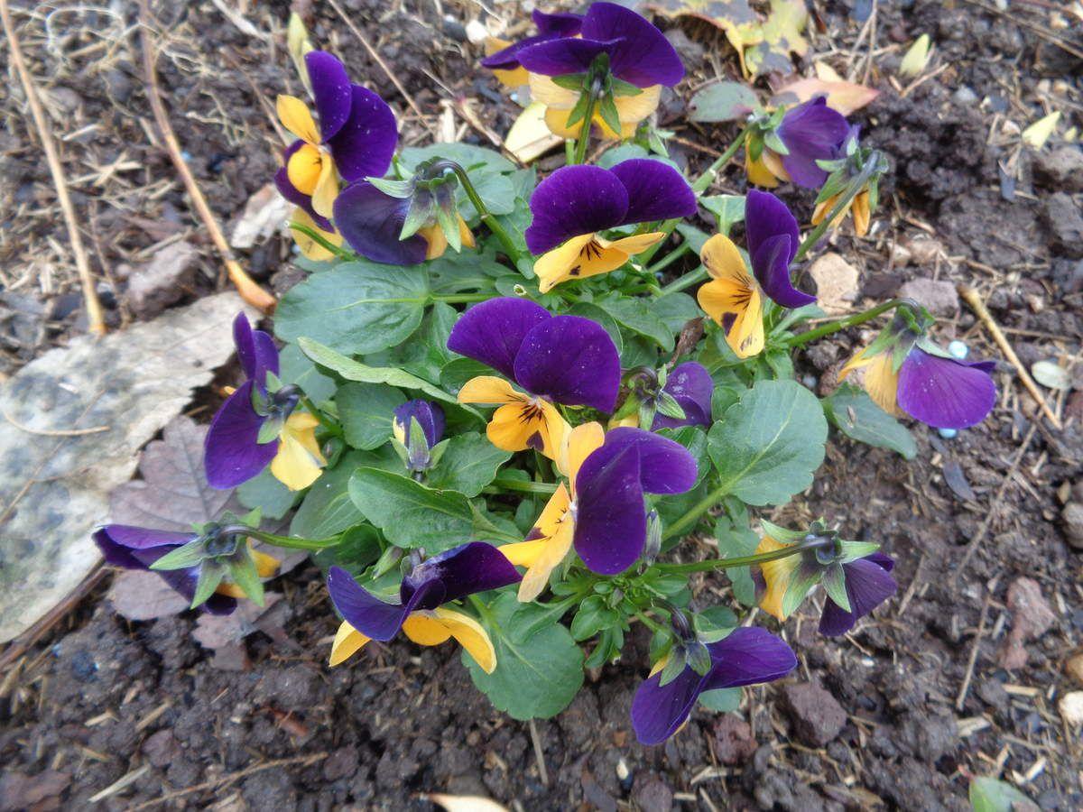 Les inconvénients  de l'hiver dans mon jardin ......