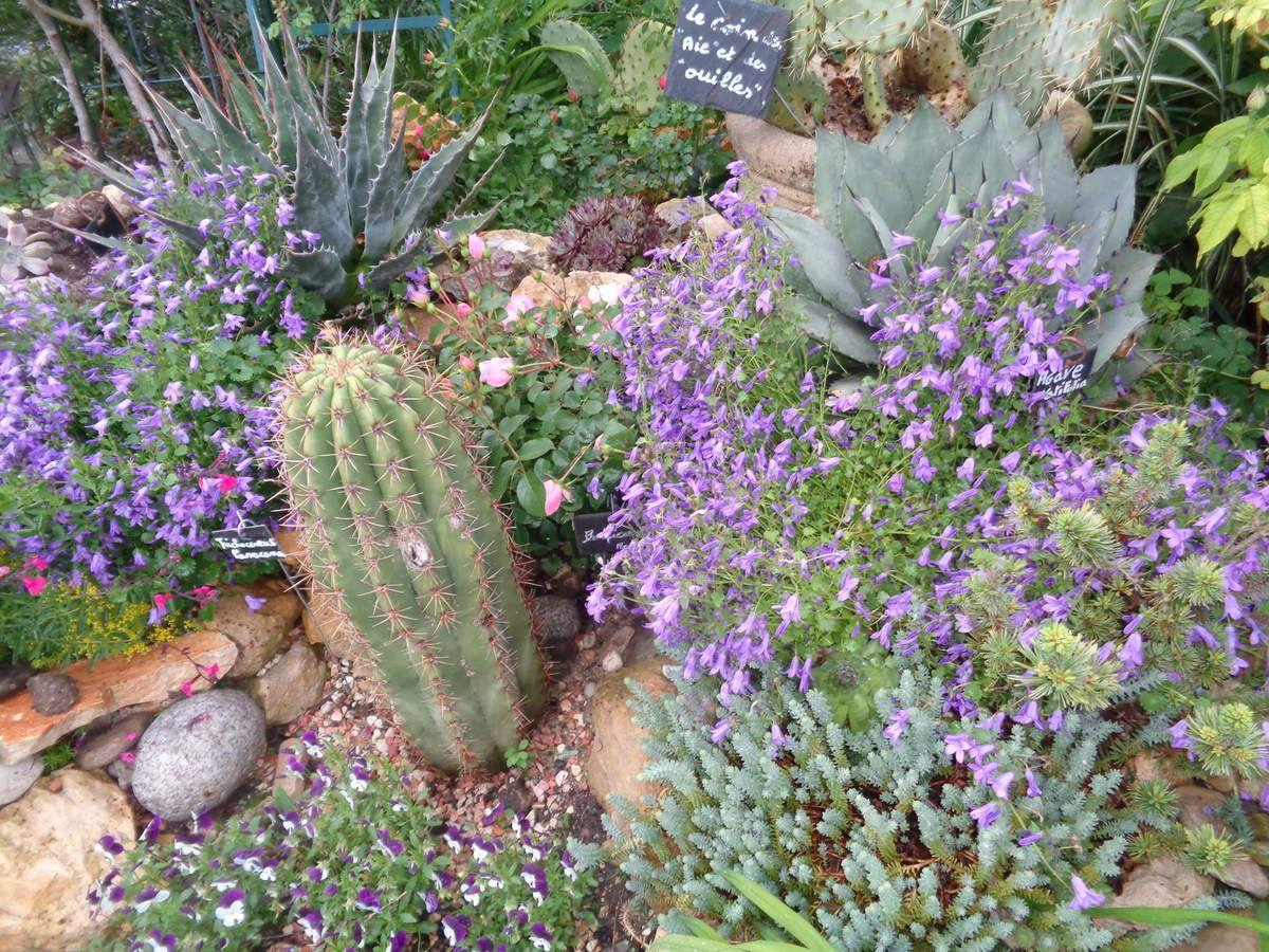 """Des cactées sans besoin d'arrosage .....dans mon petit jardin """"Le Clos fleuri"""""""