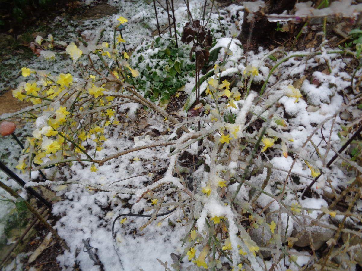 Encore une fois Le Clos fleuri sous la neige !!!!!!