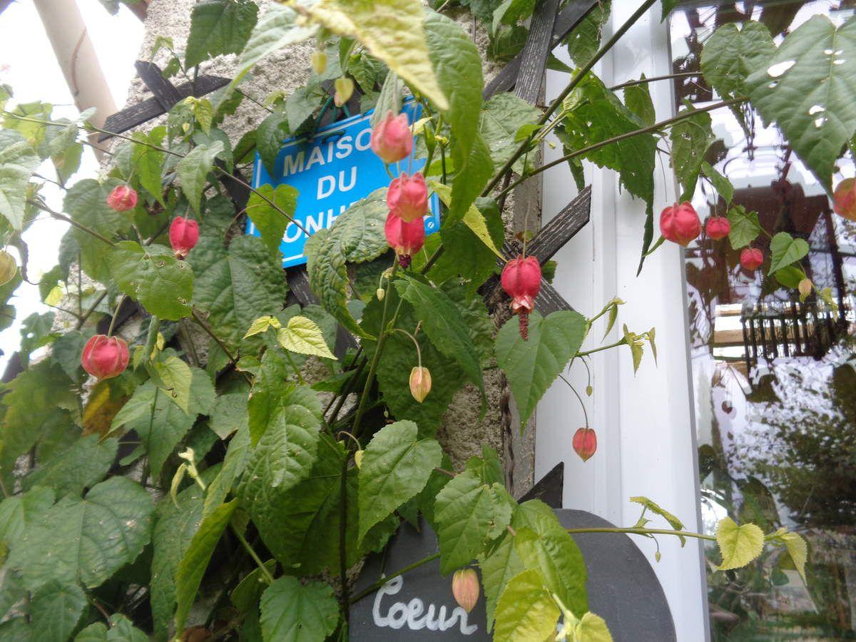 Les photos sont de moi prises dans mon jardin  et les vidéos et les gifs trouvés sur le net .....