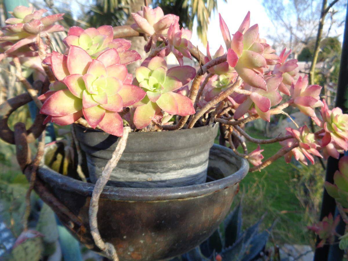 Les fleurs de mon jardin Le Clos fleuri ce 21 février ....