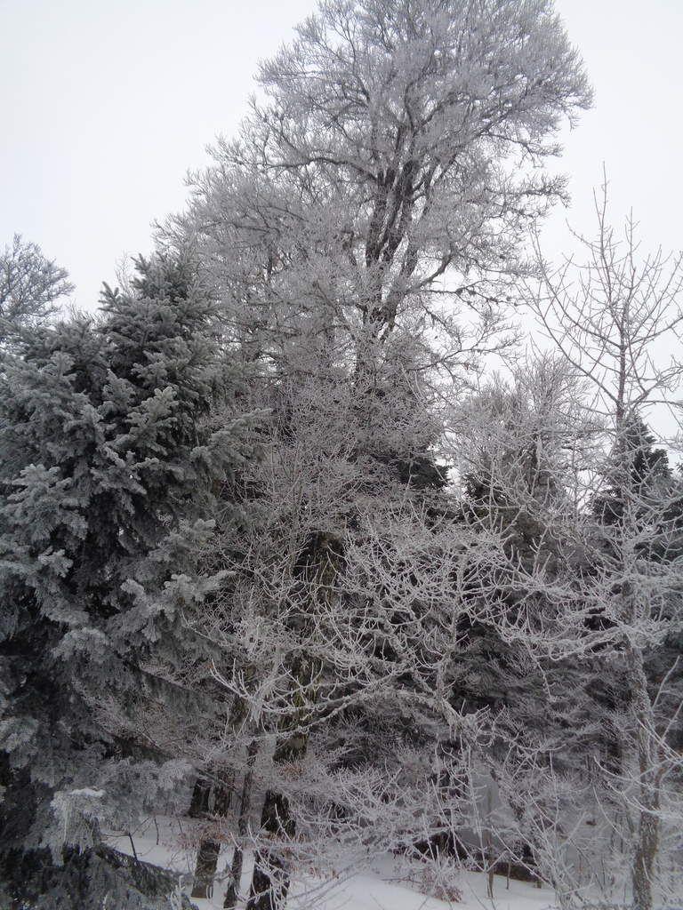 Le Scialet Royer à Font d'Urle notre  quinzième sortie Raquettes à neige de la saison  avec le club pédestre Chabeuillois :