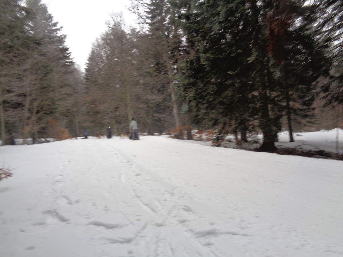 Notre seizième sortie Raquettes à neige de la saison à Vassieux en Vercors le 25 février 2018