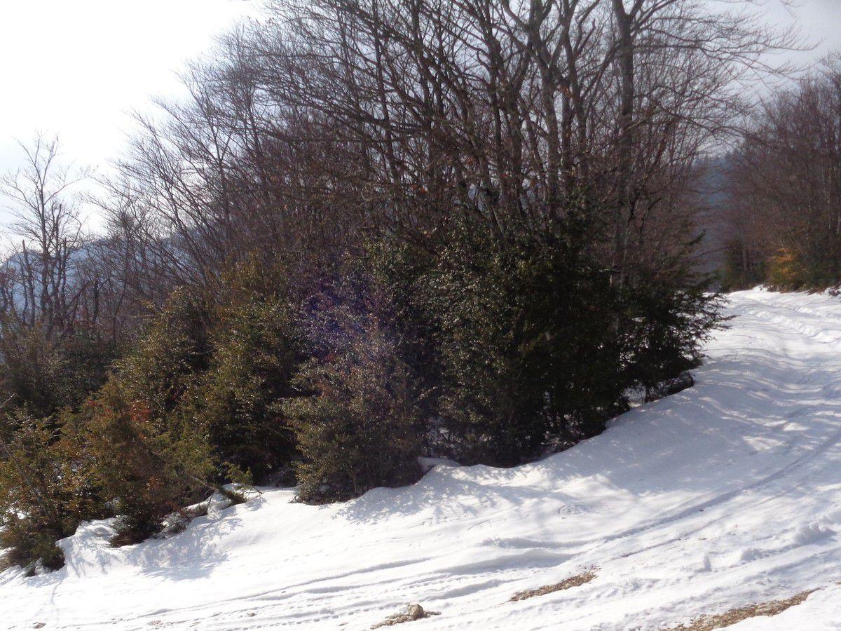 Dix septième sortie raquettes à neige  la Chapelle en Vercors, sur le plateau de Loscence avec  USCB rando de Besaye -