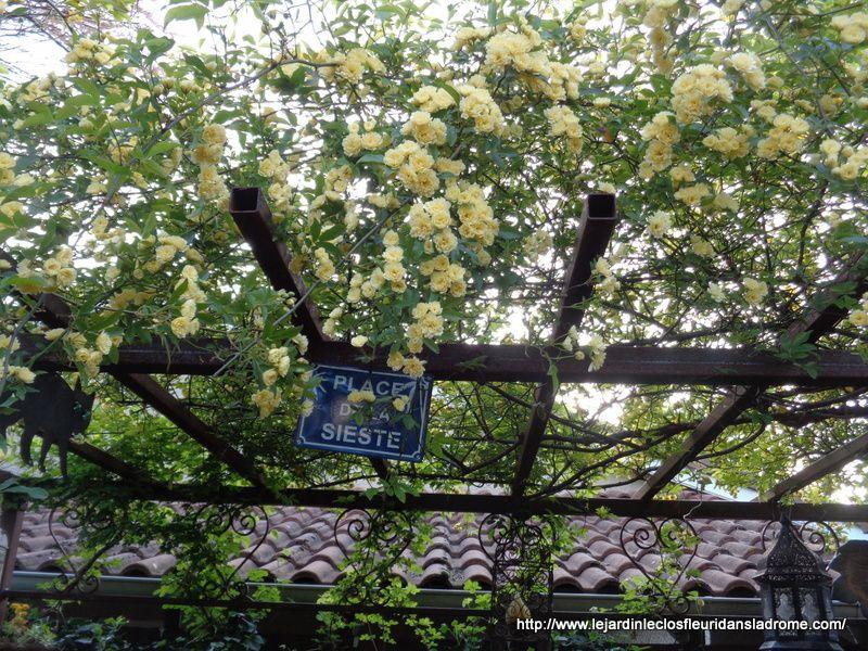 Les fleurs de mon jardin en ce moment .....