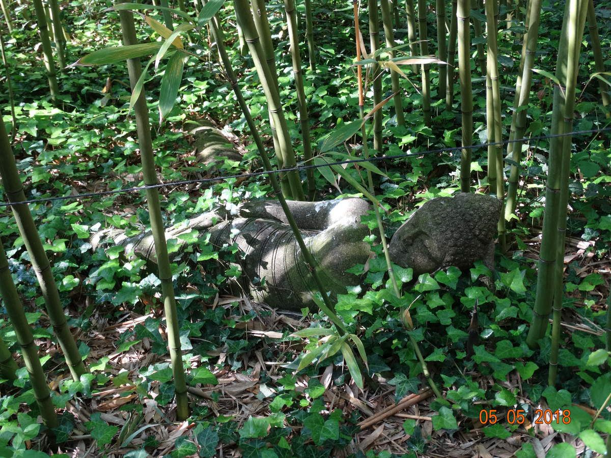 Bambous en Provence avec Bernard Le Neindre
