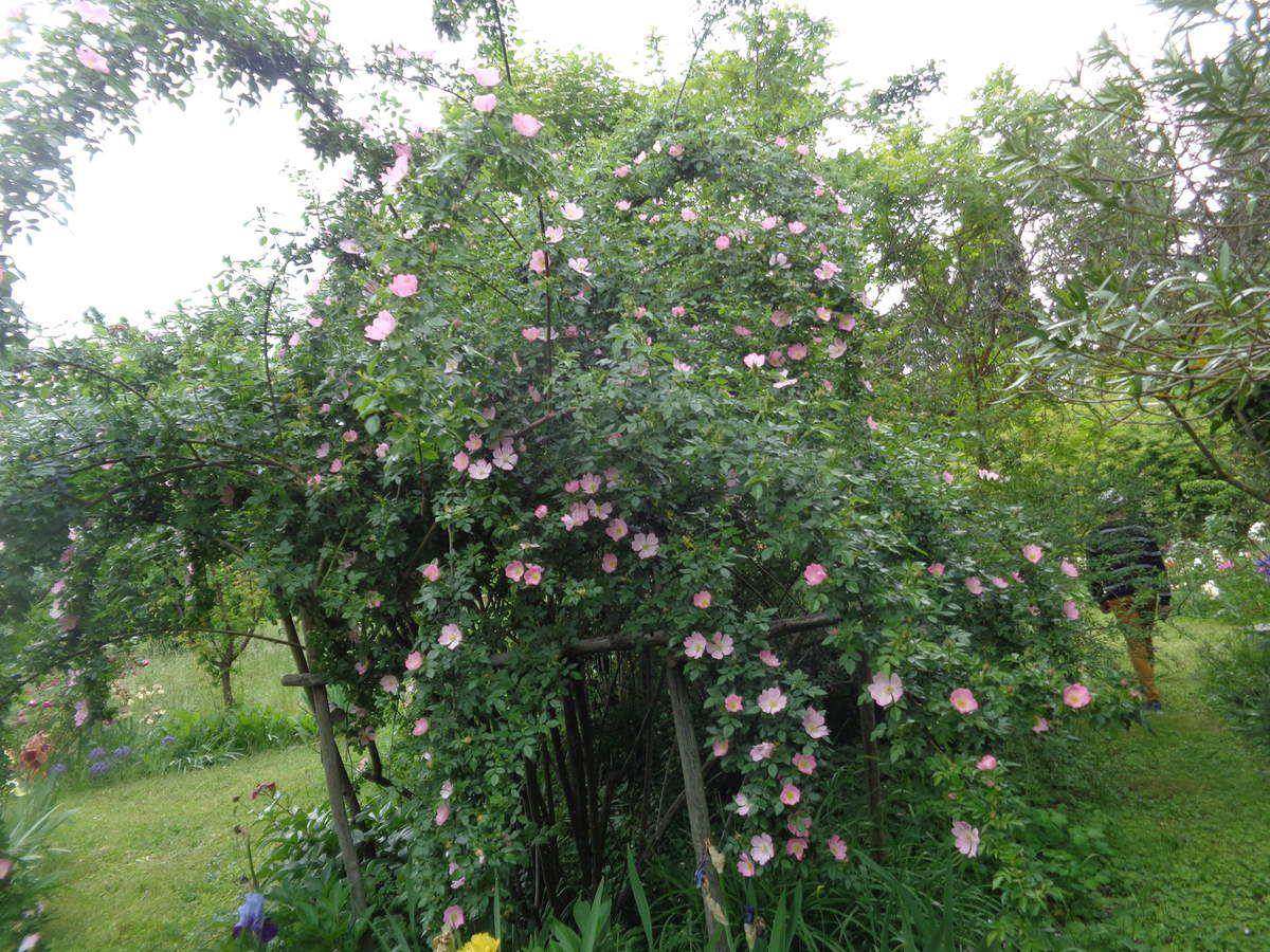 le jardin de Jane Lambert