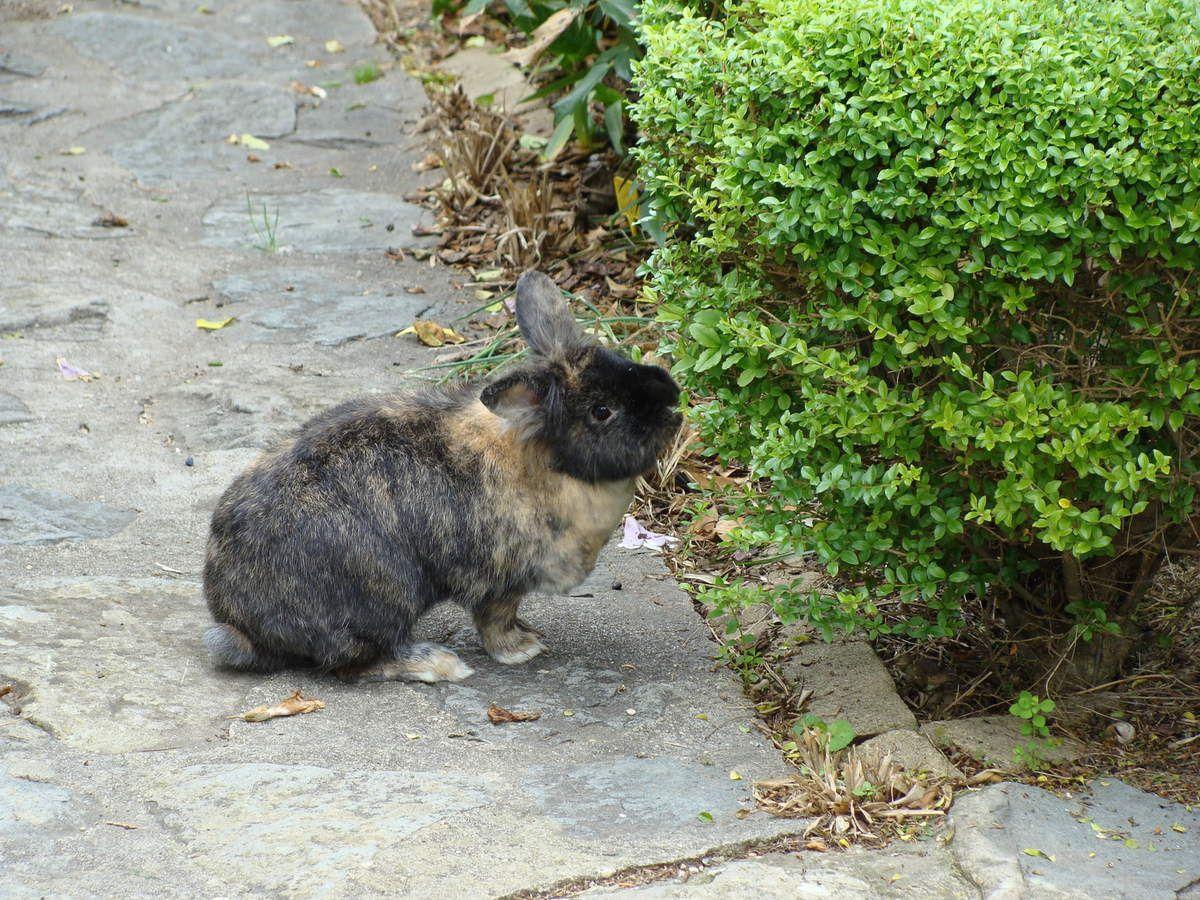 Mon petit lapin est mort et je l'aimais .....