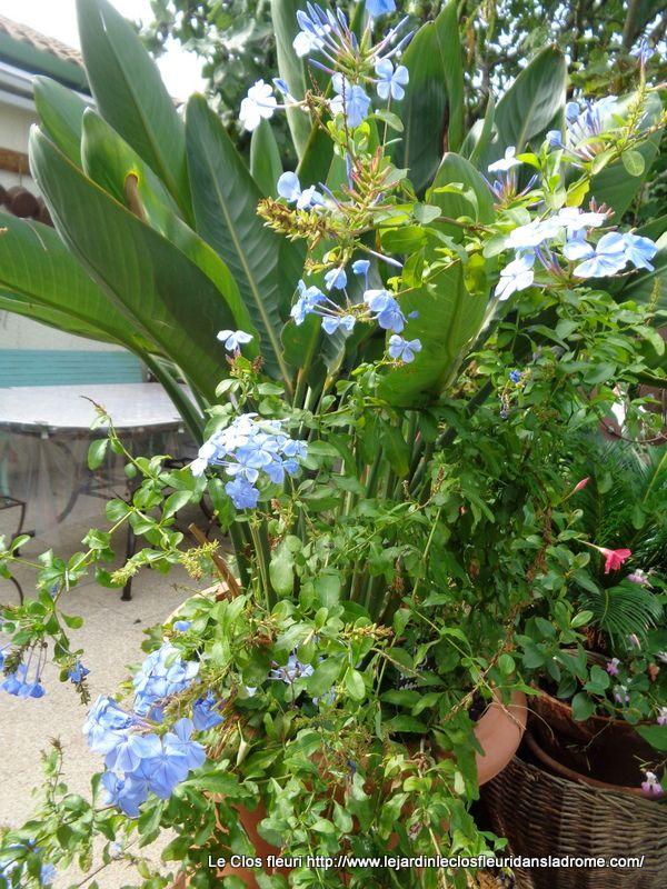 Mes fleurs au jardin en ce moment .......