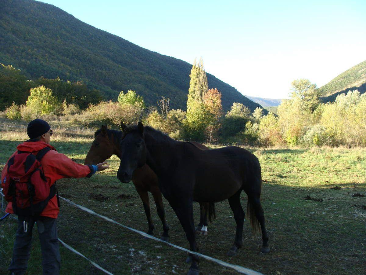 Les photos faites par mon mari Jacques ........nous avons longé un parc à chevaux ......