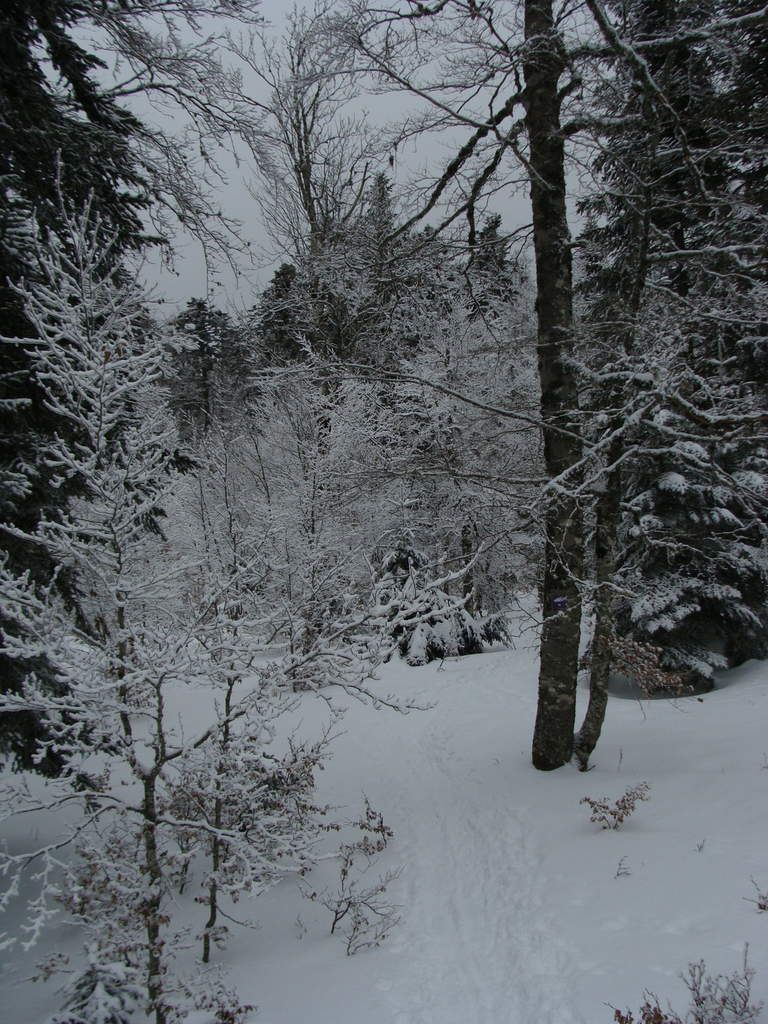 Randonnée raquette à Font d'Urle : le refuge  crobache