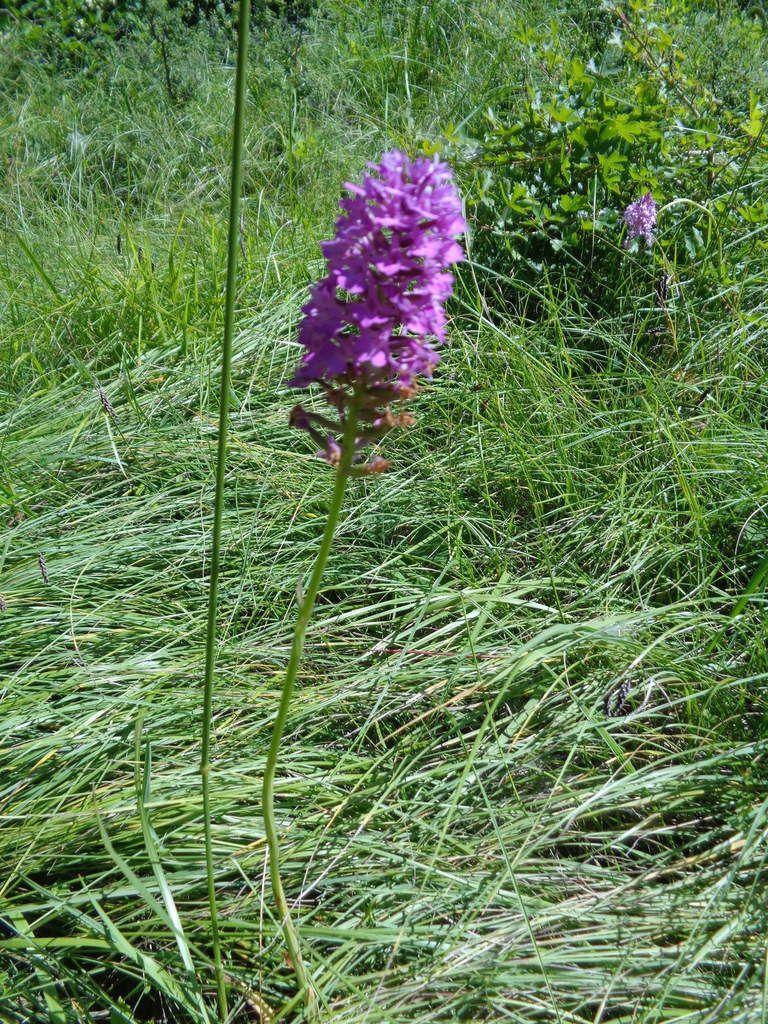La découverte d'une fleur sauvage, rare, protégée : l'orchidée.  Région de collines et plateaux calcaires, sur les contreforts du massif du Vercors, le Pays de la Gervanne offre une richesse en plantes de cette famille.