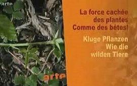 LA FORCE CACHÉE DES PLANTES : Comme des bêtes !