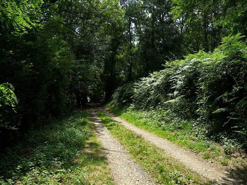 Les parcours Foulées 100 % Nature 2020 en ligne