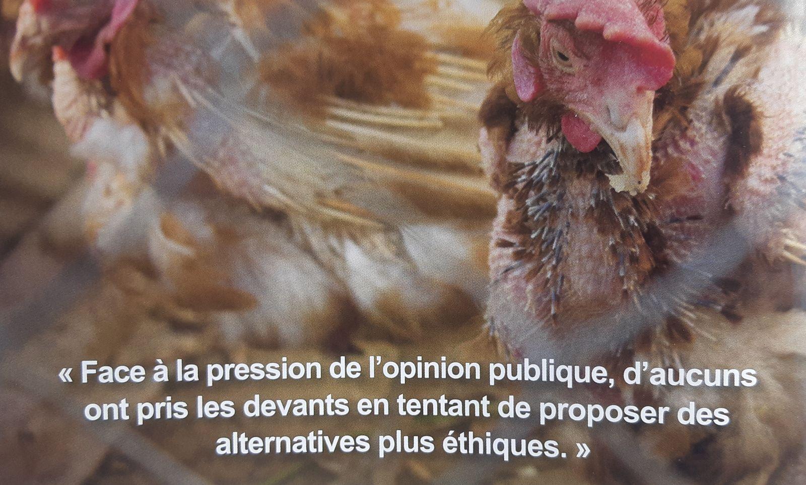 Dans l'enfer des poules pondeuses
