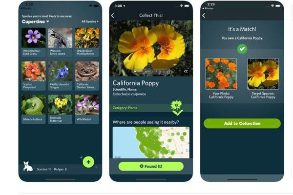 Seek, l'application Shazam de la nature