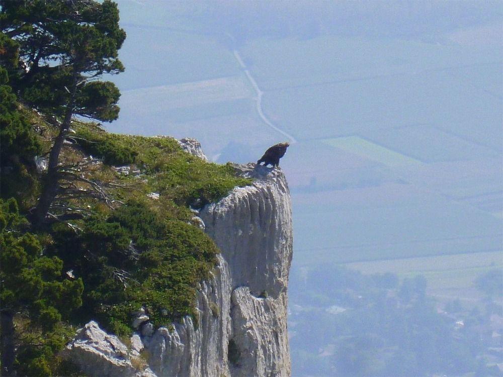 Aigle (Photo de Galipette)