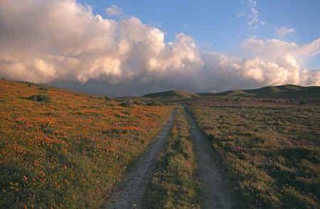 El Camino..