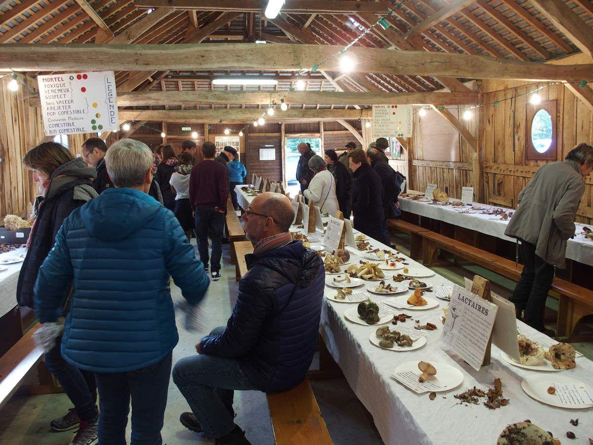 L'exposition mycologique du dimanche après-midi.