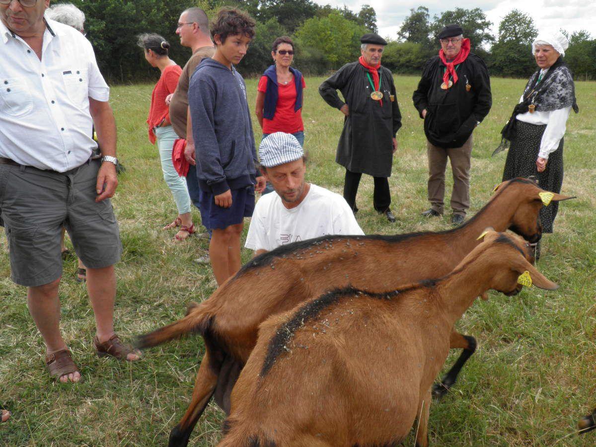 À la Mercerie, élevage de chèvres de Saint-Cyr-en-Pail