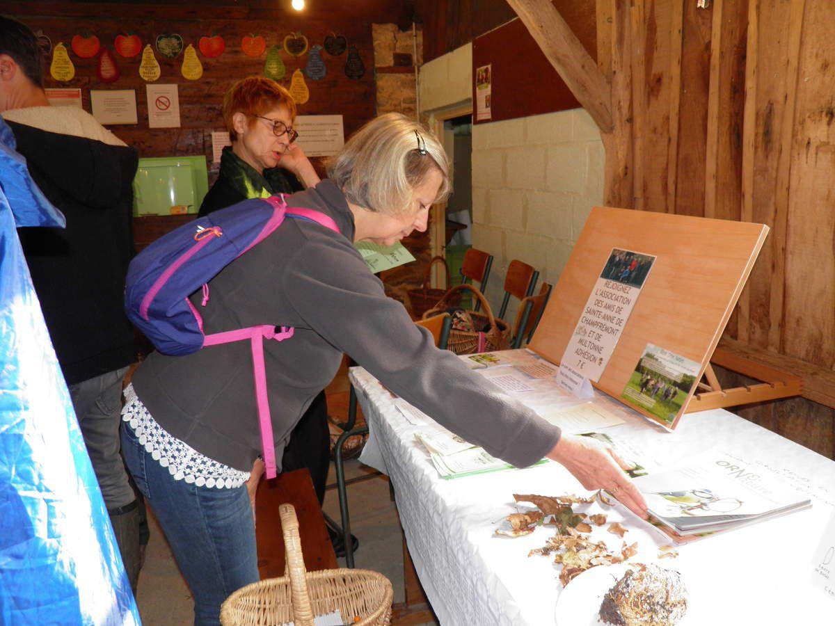 44es journées mycologiques et botaniques de Champfrémont.