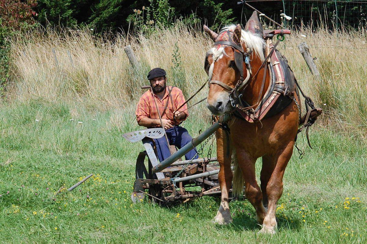 Avec le cheval maintenant.