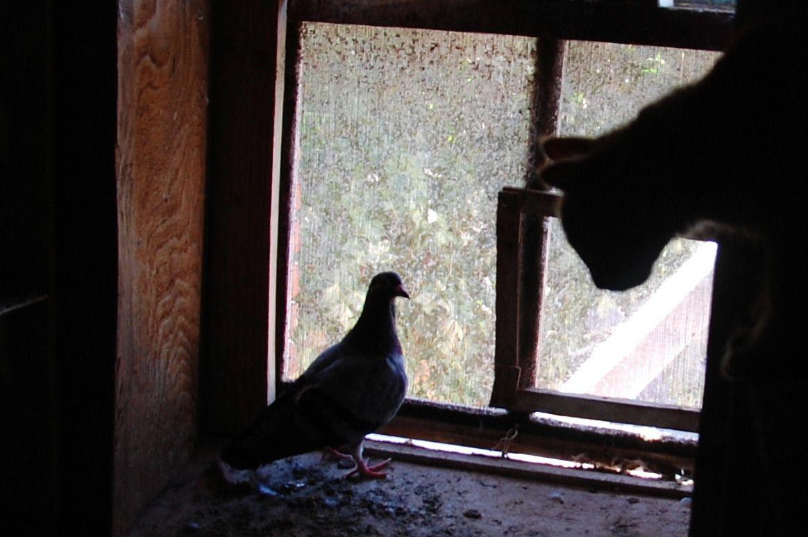 A contre jour, un chat plus haut que le pigeon c'est originale. (15)