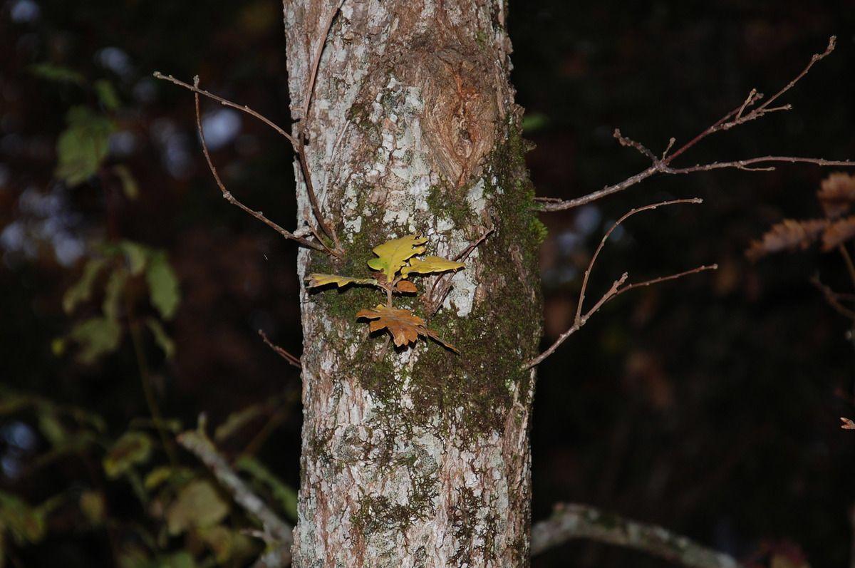 Petites feuilles sur l'arbre.
