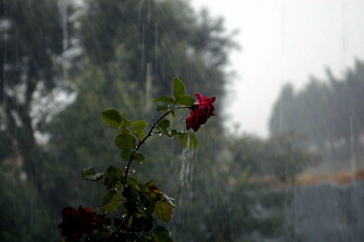 Sans le flash, c'est plus facile pour voir plus loin que la rose.